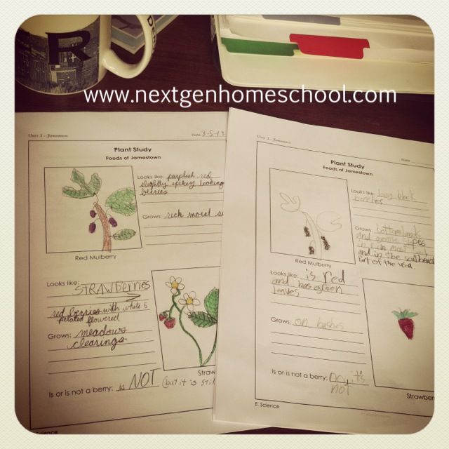 Homeschool Plant Sketches