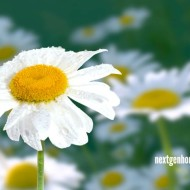 Tools to Help You Bloom as a Homeschool Mama